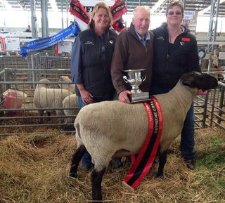 SUFFOLK RAM WINS OVERALL SUPREME ANIMAL AT CANTERBURY A&P SHOW.