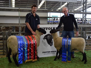 Little River Ram and Ewe Hogget winners and champion suffolk ram and ewe