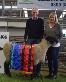 LITTLE RIVER RAM HOGGET WINS SUPREME MEAT BREED