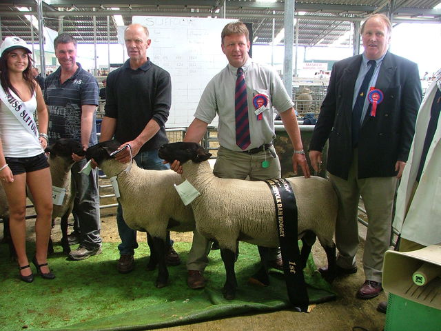 2008 First placed ram hogget, bred by Grant Beckett
